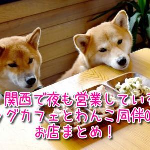 関西で夜も営業しているドッグカフェ&わんこ同伴OKのお店まとめ!