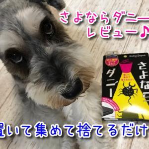 【さよならダニ―】置いて集めて捨てるだけ!ダニで起こる怖い病気から愛犬を守ろう!