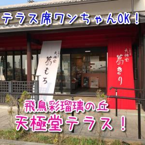 【天極堂テラス】自社製造の吉野本葛で作った葛もちが美味しい!ワンちゃんテラス席OK!
