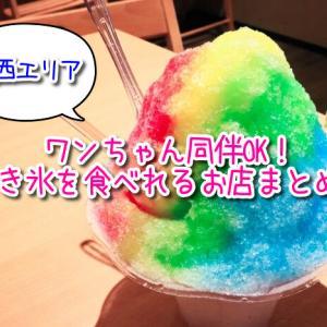 【関西エリア】かき氷を提供しているお店まとめ!テラス席ワンちゃん(ペット)同伴OK!夏の暑さを乗り切ろう!