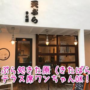 【天ぷら処きた原】テラス席ワンちゃんOK!カラっと揚げたてサクサクが美味しい!夜も定食あり!