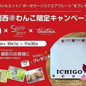 【関西@わんこ限定】×ペット撮影SnapShot×ポーセラーツ作家toratoraコラボ企画!愛犬シルエット(お名前入り)プレートプレゼント!