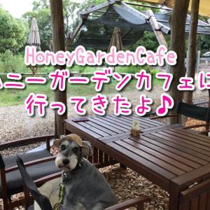 【ハニーガーデンカフェ】テラス席ワンちゃんOK!自然に囲まれた隠れ家的なお店!自家製みつろう使用のカヌレが美味しい!