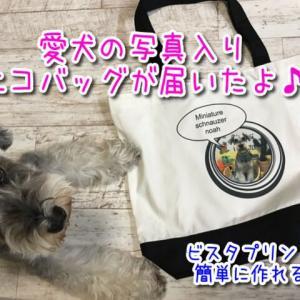 ビスタプリントから愛犬のオリジナルトートバックが届いたよ♪たっぷり入ってお出かけ用バッグとしても使える!