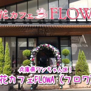 【花カフェFLOWA(フロワ)】兵庫県ペット可カフェ!お花のアーチが素敵なテラス席でワンちゃんと同伴OK!