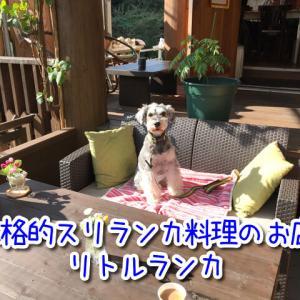 【リトルランカ】兵庫県西宮市にある本格スリランカ料理のお店!スパイシーなカレーが最高!テラス席ワンちゃんOK!