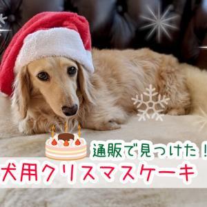 犬用のクリスマスケーキをネット通販で買おう!ワンちゃんのデリ(おかず)とセットになったものもまとめて紹介!