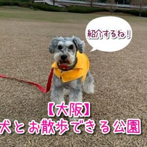 【ペット可】大阪で犬とお散歩ができるおすすめの公園をまとめました!マナーを守って利用しましょう!