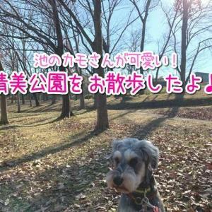 【晴美公園】堺市!人懐っこいカモさんが可愛い!広場や池まわりで犬とお散歩できるよ♪駐車場20台無料!