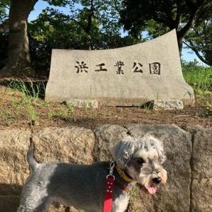 【浜工業公園】大阪府岸和田市!広場もありワンちゃんとゆったりお散歩できます!駐車場無料!