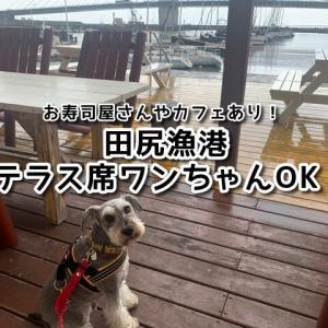 【田尻漁港】海が見えるテラス席☆ワンちゃんOK!お寿司やさんやカフェでランチ可(テイクアウトも)駐車場無料!