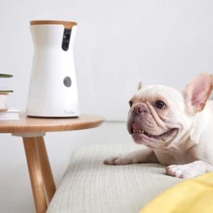 【ファーボ】ペットの見守りカメラの評判や値段を調査!最安値とセールでお得に購入する方法も紹介!