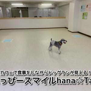 【はっぴースマイルHana&Tan】大阪市城東区☆カフェから室内ドッグランの様子が見れる!幼稚園・トリミングなどもあるワンちゃんの複合施設!