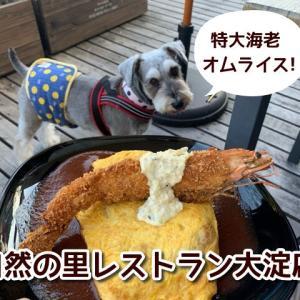 【自然の里レストラン】奈良県御所市★特大エビフライをトッピングしたオムライスが人気!テラス席ワンちゃんOK!