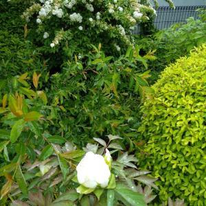 5月24日の庭