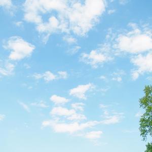 ハコフグ記念・春望特別・2020川崎ジョッキーズカップ第1戦2020予想┃トリプル馬単対象レースの本命馬発表