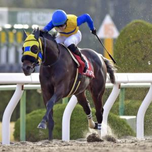 [東海ステークス2021]予想オッズ・出走予定馬とデータ予想!1番人気に逆らうな。注目は休み明けの馬