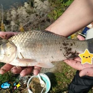 鯉 ともソーシャルディスタンスΣ(゚Д゚)