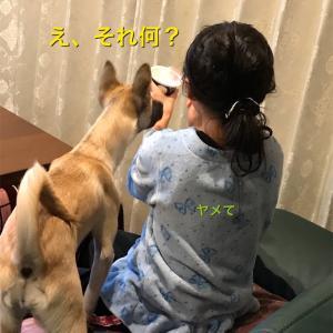 犬にヨーグルトをあげて大丈夫? 大丈夫です!! メリットいっぱい!