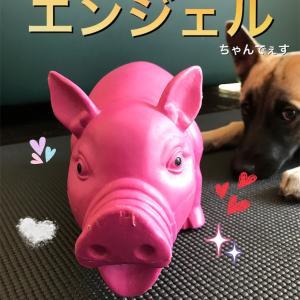 飛べない豚は...回収しまーす