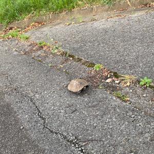亀を石かと思ったら違うことに気づき急に怖くなった