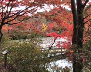 秋の癒し。森林植物園へ。