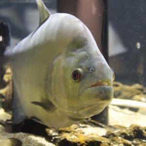 川崎市初の水族館