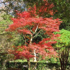 散策・ハイキング・ピクニック・バーベキューと何でも揃った県立七沢森林公園