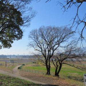 ピクニックにもぴったりの県立相模三川公園 丹沢の山並みも清々しい