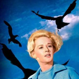 『鳥』1963年製作のヒッチコック作品、古臭さナシ!大量の鳥たちが人間に襲いかかるパニックスリラー