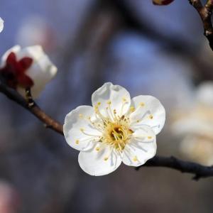 ドラゴン桜を読んでみて(1)