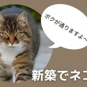 新築で猫を飼ったら一年も経たないうちに何もかもがボロボロに!対策は?