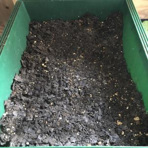 ボスコベル 植え替え 鉢増し part2