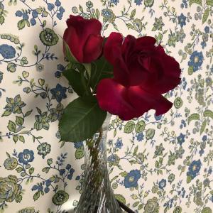 強い薔薇*南の花壇編