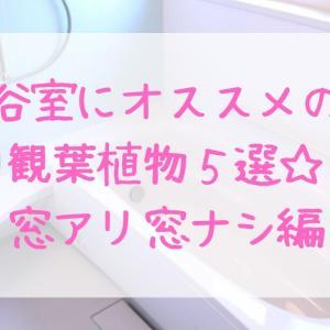 お風呂に置ける観葉植物おすすめ5選【窓アリ・窓ナシ】はこれ!