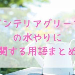 インテリアグリーン☆水やりの基本用語まとめ