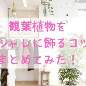観葉植物をオシャレな飾り方☆場所やアイテムを工夫しよう!