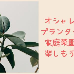 家庭菜園をおしゃれなプランター(コンテナ)で始めてみよう☆