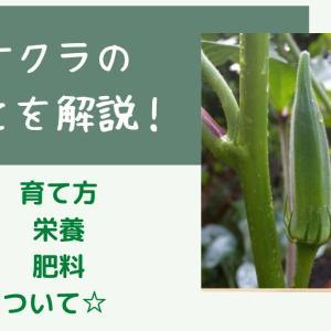 家庭菜園でのオクラの育て方☆プランター栽培のポイントまとめ