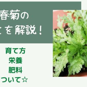 家庭菜園での春菊の育て方☆プランター栽培のポイントまとめ