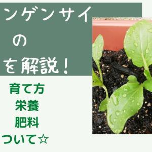 家庭菜園でのミニチンゲンサイの育て方☆プランター栽培のポイントまとめ