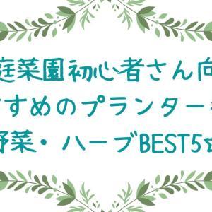 【家庭菜園初心者向き☆】秋植えのプランター菜園におすすめの野菜ベスト5!