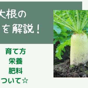 家庭菜園での大根の育て方☆プランター栽培のポイントまとめ
