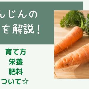 家庭菜園でのにんじんの育て方☆プランター栽培のポイントまとめ