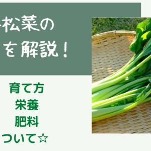 家庭菜園での小松菜の育て方☆プランター栽培のポイントまとめ