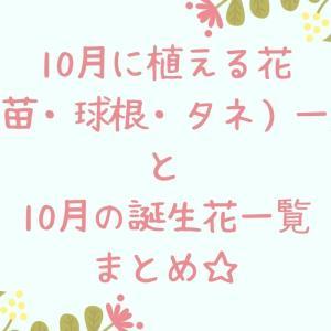 10月に植え付けできる花・誕生花一覧まとめ