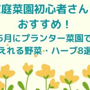 【家庭菜園】5月にプランターで植えれる野菜はコレ!初心者向け8選