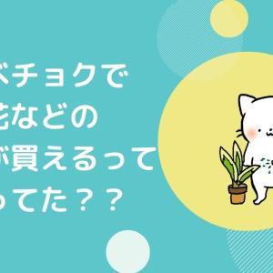 【花チョク】食べチョクで植物(花・ハーブ・盆栽)が買えるって知ってた⁉