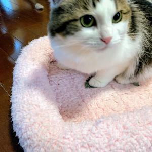 本日の猫: 2020/1/30 キャットニップに夢中の猫