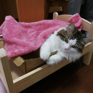 本日の猫: 2020/2/2 一瞬だけIKEAベッドに入った猫